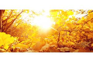 header herfst